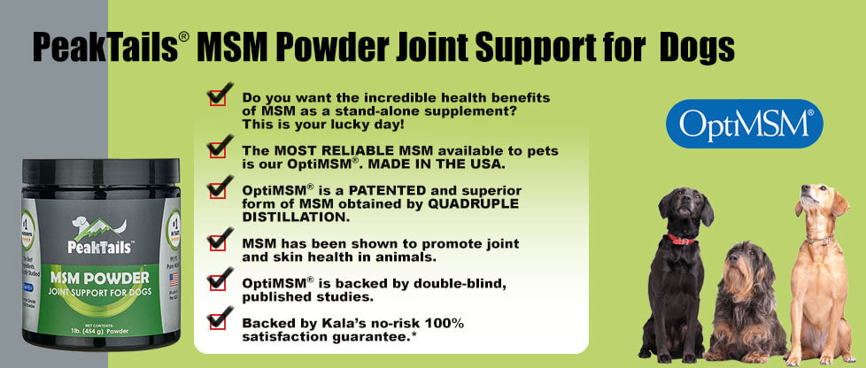 Advantages of MSM Powder Joint Support for Dogs